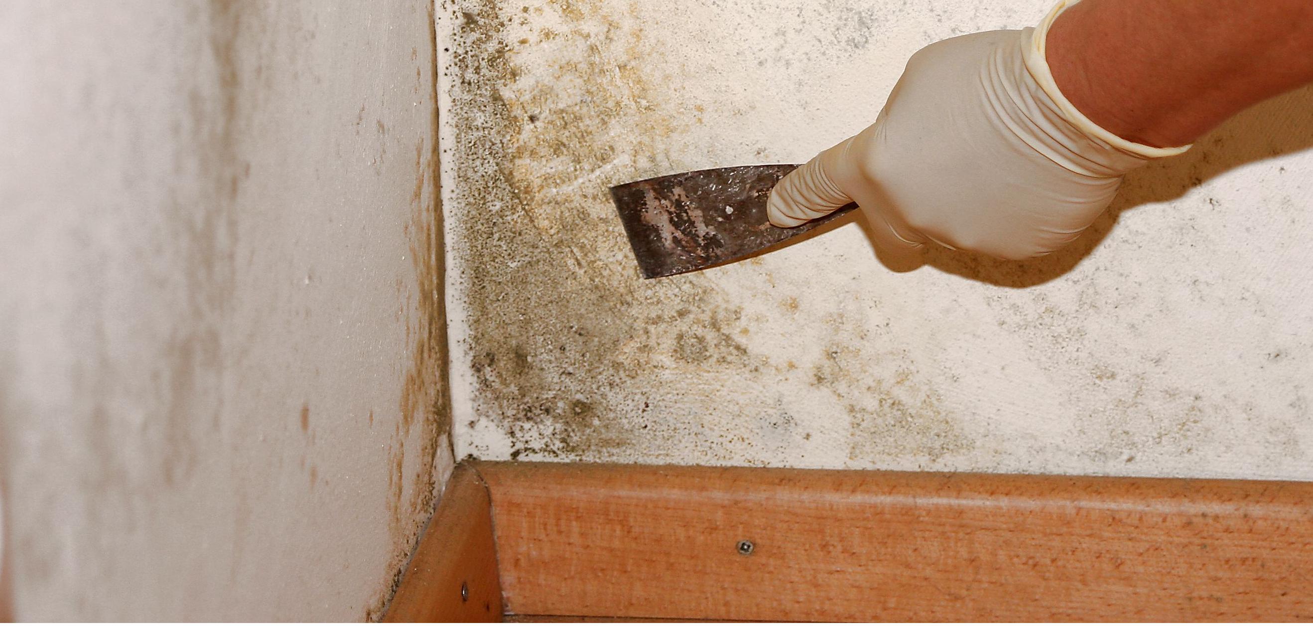 Как избавится от грибка на стенах в домашних условиях
